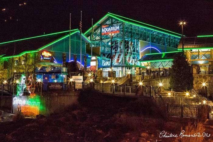 Ripley's Gatlinburg Aquarium – A Tennessee Must See